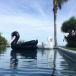 Inflatable deck chair giant Black Swan